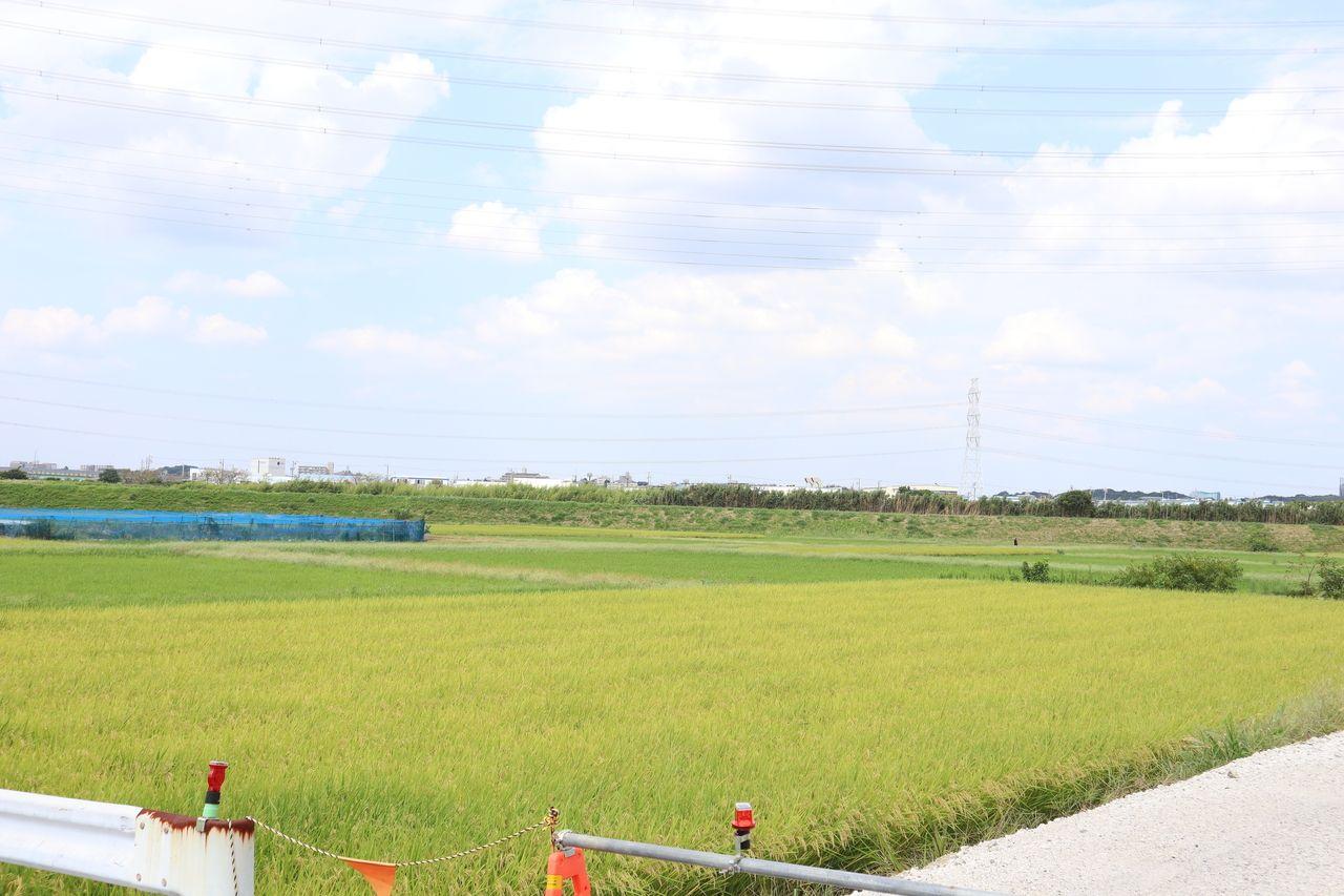 9/25撮影 刈谷市三田町の田園風景 江戸時代末期まではこの辺り一帯は海で、入り海は泉田村(現刈谷市泉田町)の辺りまで入り込んでいた。入り海の幅は平均でもおよそ1.5km程あったと思われる。